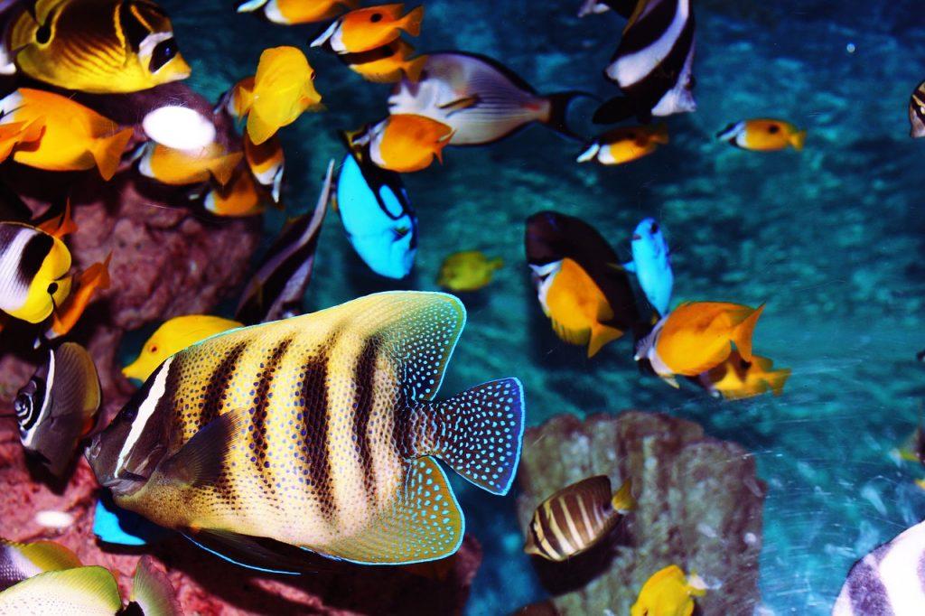 Akvarij na delovnem mestu